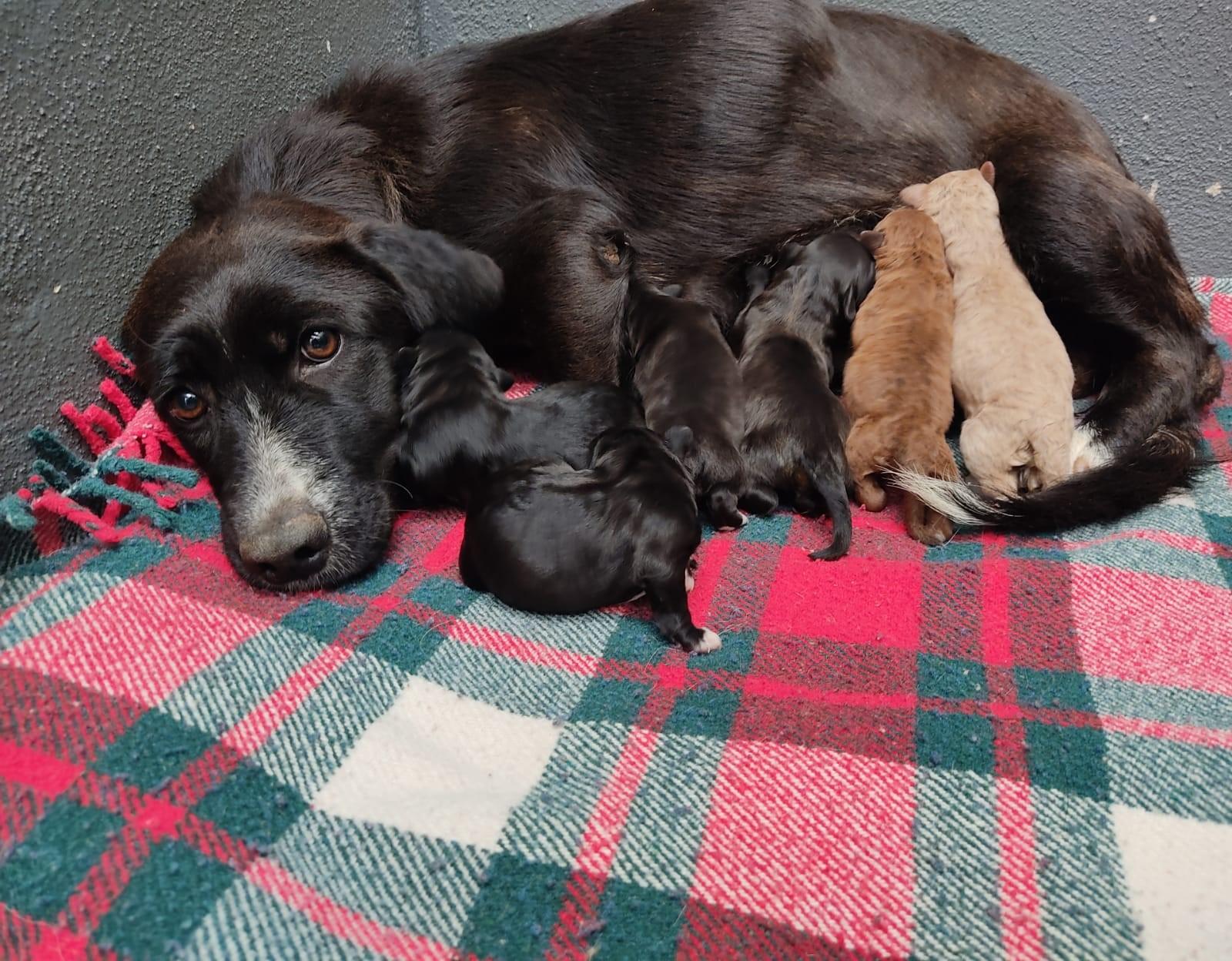 Brisa, Brétema, Laias, Centella, Mauro y Allo se recuperan para poder ser adoptados