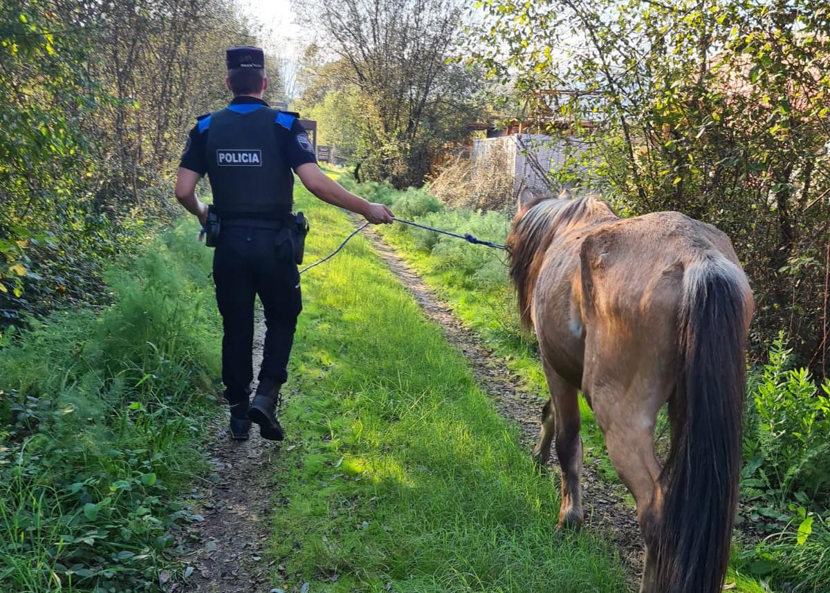 La Policía Local rescata a un caballo que caminaba por el polígono industrial